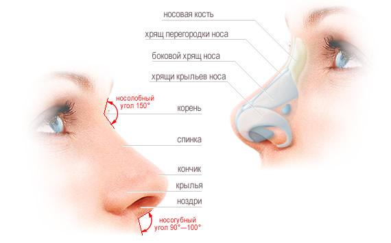 Коррекция носа одесса